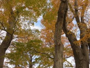 安曇野の秋2