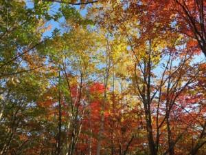 信州の秋pict-IMG_0037