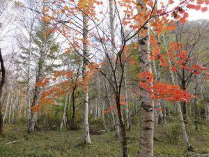 美ヶ原山系の紅葉 pict-img_1414